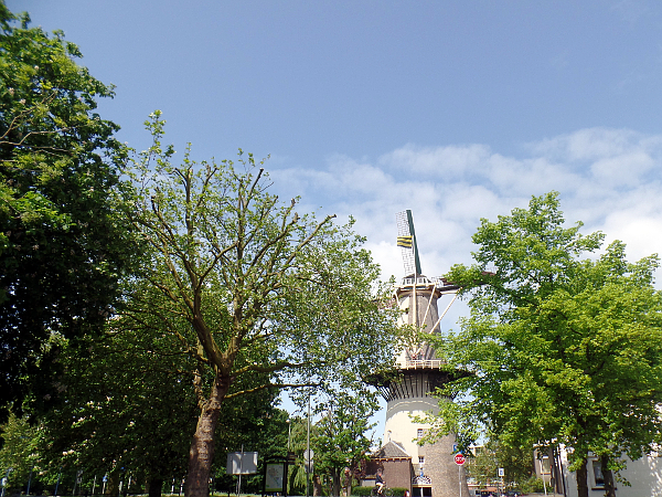 """Mühle """"Die 3 Kornblumen"""" in Schiedam"""