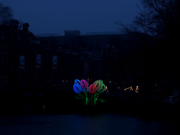 Bunch of Tulips, Peter Koros, Amsterdam Light 2016/17