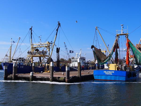 Fischereihafen Oudeschild auf Texel
