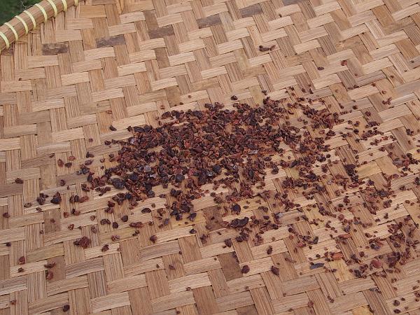 Schokolade machen im CacaoLab Zaans Gedaan
