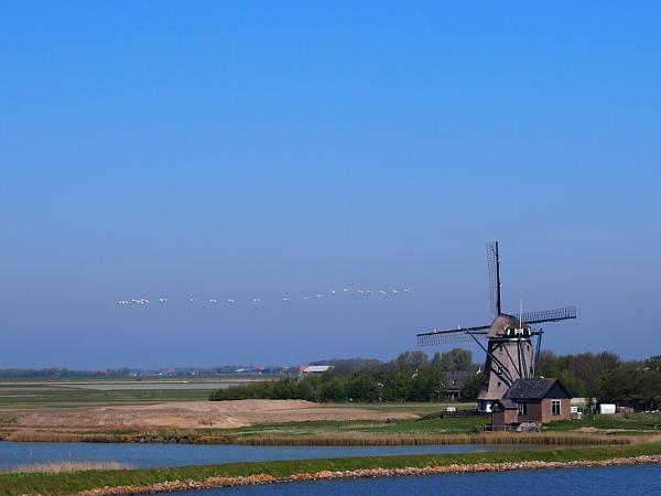 Windmühle auf Texel
